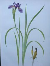 Iris Antique Botanical Print 1913 Iris Bulleyana, W.R. Dykes