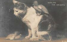 Rppc Cat & Birds Scaling The Heights Rotograph Studio Real Photo Postcard 1907
