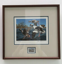 1995 Buffleheads Texas Duck Stamp print and Stamp Framed #4938 by David Maass