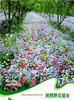 1Pack 200 Seeds formidable Tolerance Wildflowers Mix Seed Flower Seed JX