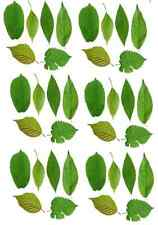 36 x Green Leaves Edible Cake Cupcake Toppers Wafer Paper Fairy Cakes A4 Sheet
