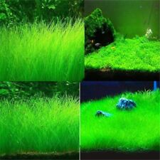 Aquarium Plant Seeds Water Aquatic Plant Grass Fish Tank Live Plants Easy Grow