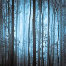 Quiet Dark Forest 10'x10' CP Backdrop Computer Printed Background LMG-106