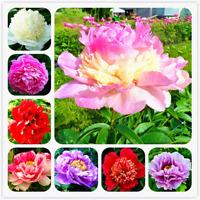 10 Pcs Seeds Peony Bonsai Blooming Courtyard Plants Rare Flowers Garden Plants O