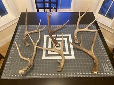 6 Deer Antler Sheds Mule Deer #1 Grade Wild Idaho Horns Lot Fresh Wedding Decor