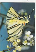 Scarce Swallowtail Butterfly Postcard used VGC