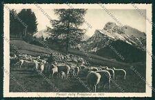 Bergamo Cantoniera della Presolana Alpeggio Gregge cartolina EE7745