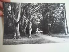 Vintage Real Photo Postcard A NEW FOREST GLADE   §A1055