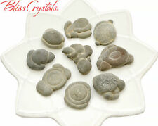 """1 Small FAIRY Stone Concretion """"Animal Totem"""" Formation, Healing Crystal #FS40"""