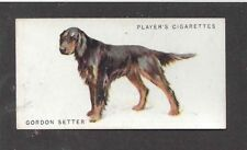 1931 UK Arthur Wardle Dog Art Body Study Player Cigarette Card GORDON SETTER