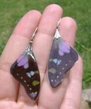 Real Butterfly Wings Purple Graphium Forwing & .925 STERLING SILVER Earrings