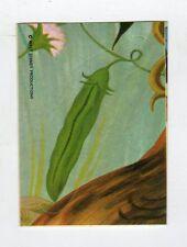 figurina - TOPOLINO STORY EDIZIONI FLASH 1989 - numero 237