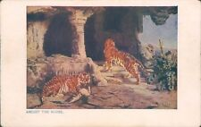 Postcard Tigers  Amidst The Ruins unposted