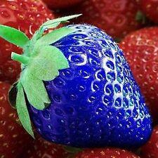 """Erdbeeren - Samen """"African Blue"""" *** blaue Erdbeeren *** 40 Samen"""