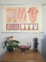 FANTASTIC VINTAGE PULL ROLL DOWN MEDICAL SCHOOL WALL CHART THE SKIN AND TONGUE