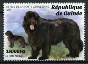 Guinea Dogs Stamps 2021 MNH Newfoundland Dog Breeds Domestic Animals 1v Set