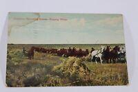 Antique Vintage Souvenir Post card 1908 Collectible Canadian Harvest Postcard