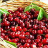 20PCs Cherry Seeds Organic Seeds Fruit Seeds Bonsai Tree High seed in the Garde