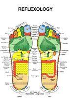 """Reflexology Foot Poster #01 24""""x36"""""""