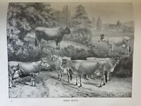ANTIQUE PRINT C1910 JERSEY CATTLE COWS COW DAIRY FARMING BLACK & WHITE ART PRINT