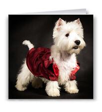 Westie Greeting Card - Dog West Highland Terrier