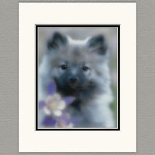 Keeshond Columbine Original Art Photograph Matted 11x14