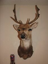 Fallow Deer Head Shoulder Mount Taxidermy Whitetail Antler Sika Mule Axis Exotic