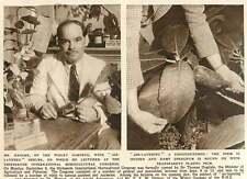 1952 Mr Hanger Wisley Gardens Air Layered Shrubs