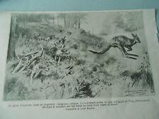 Un Gibier d'Australie chassé en Angleterre Kangourou renard 1924 Image Print