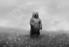 Incorniciato stampa-GRIZZLY BEAR permanente sul retro le gambe alla ricerca (PICTURE POSTER