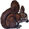 Squirrel Patch Iron Sew On T Shirt Jacket Jeans Dress Embroidered Animal Badge