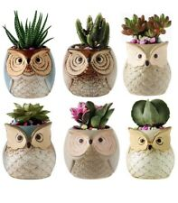 New listing 2.5 Inch Owl Ceramic Succulent Planter Pots Set of 6