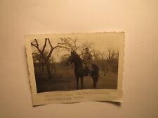 Meldereiter Gefr. Kaufmann in Frankreich 1940 - Soldat auf einem Pferd / Foto