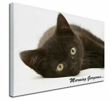 More details for black cat 'morning gorgeous' x-large 30