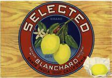 Santa Paula Ventura County Selected Lemon Citrus Crate Label Vintage Art Print