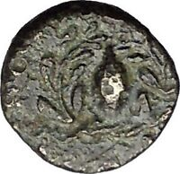 Elaia in  Aiolis 340BC Authentic Ancient Greek Coin Athena Corn-grain  i49545