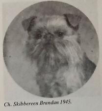12 antique photographs champion dogs 1981 Brussels Griffon Bruxellois