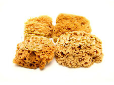 "Lot of 4 Natural Painting Sea Sponge 5-6"" and 6-7"" Size"