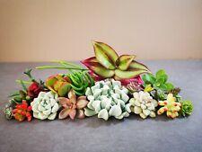 All Different Succulent Cuttings x 25 Succulents Echeveria/Sedum/Crassula