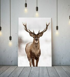 RED STAG - DEEP FRAMED CANVAS WALL ART PICTURE PRINT WILDLIFE/SAFARI