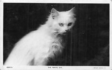POSTCARD  CATS     The  White   cat