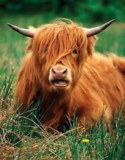Lindo highland Cow-Premuim Calidad Mouse mat/pad - # 3