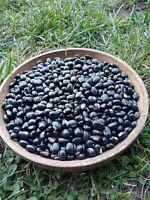 Organic black Mucuna Pruriens Seeds, 15 Seeds