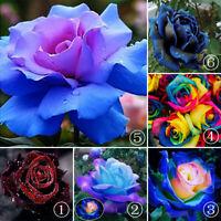 50Pcs Rare Rainbow Rose Flower Seeds Home Garden Balcony Plant Gift Decor