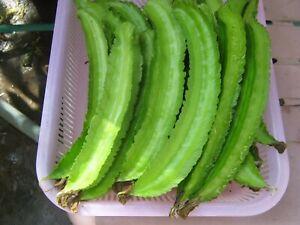 30 Winged Bean Seeds/ Asparagus Bean/ Dragon Bean US seller FREE SHIPPING!!