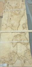 "Olive Ash Burl wood veneer 16"" x 45"" raw with no backing 142"" thickness ""A"""