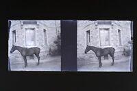 Francia Suisse Cavallo Foto Stereo Th3L1n20 Placca Da Lente Vintage Negativo