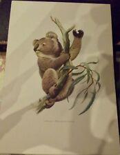 N°7 Mammal Poster The Koala of the Australian continent