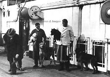"""Photo: 5"""" x 7"""": Show Dogs On Board The RMS Titanic, April 10, 1912"""