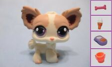 Littlest Pet Shop #438  Long Haired Chihuahua+ 1 FREE Access Authentic Has wear